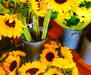 flowers, sunflowers, and yellow image