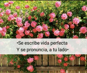amor, frases, and quotes image
