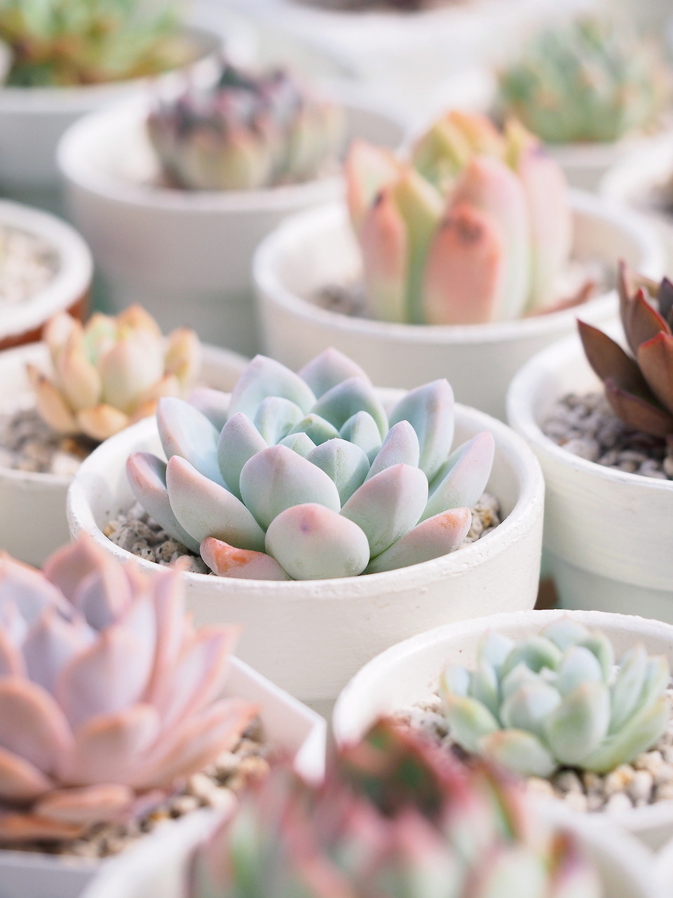 Image About Pink In Cactus By Melissac On We Heart It