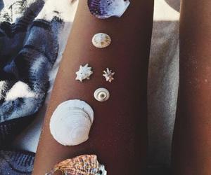 beach, seashells, and tan image
