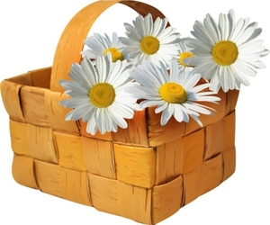 daisies, flower basket, and spring image