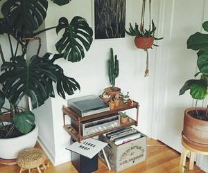 decoration, interior design, and plants image