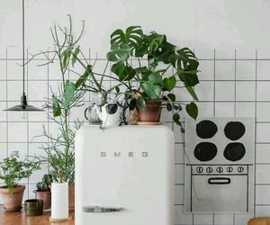 plants and kitchen image