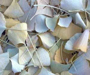 leaves, pastel, and texture image