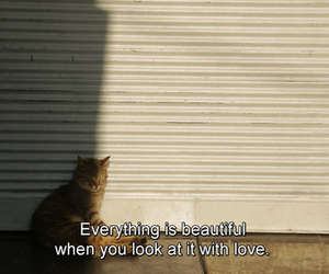 love, quotes, and cat image