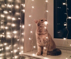cat, christmas, and holiday image