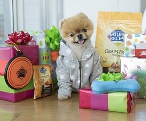 jiiffpom dog cute adoble image