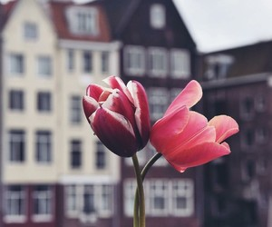 flowers, travel, and city image