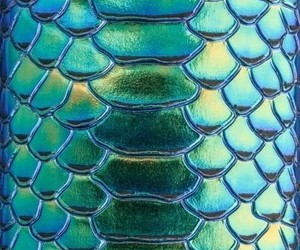 blue, green, and scales image