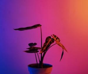 neon lights and plant image