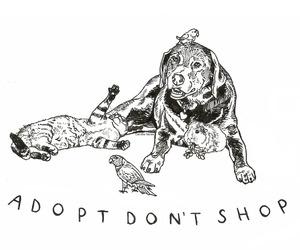animal, dog, and adopt image