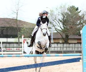 equitation, grey, and horse image