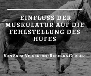 dressage, success, and horses image