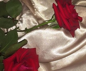 rose, red, and tumblr image
