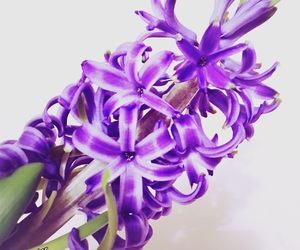 floral, nature, and purpleflowers image
