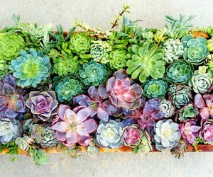 succulent and nature image