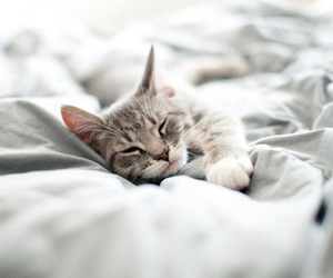 animal, cat, and cute image