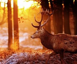 deer and sun image