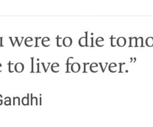 happiness, tumblr quotes, and live image