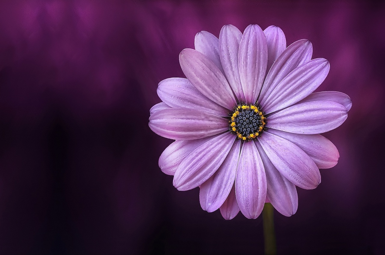flowers, article, and purple image