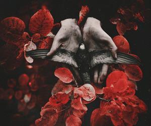 dark and dead bird image
