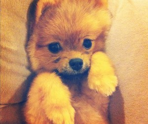 dog, cute, and hatchi image