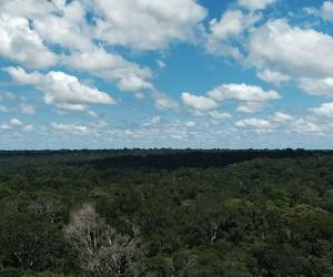 Amazon rainforest, amazonia, and forest image