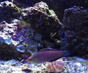 aesthetic, fish, and aquarium image