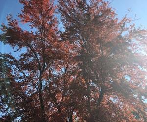 aesthetic, autumn, and basic image