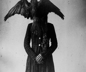 crow, raven, and dark image