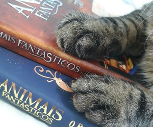 book, cat, and cats image