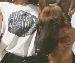 dog, german shepherd, and pierce the veil image
