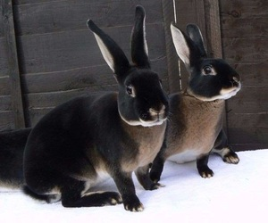 animals, hare, and rabbit image