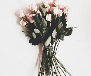 aesthetic, flowers, and amazing image
