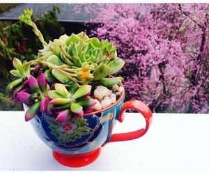 cacti, cactus, and nature image
