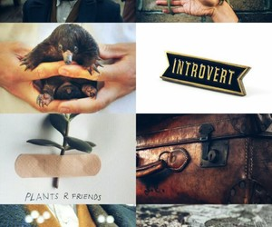 harry potter, mine, and fantastic beasts image