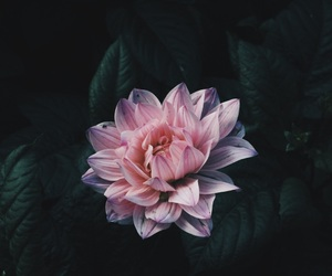 aesthetic, flower, and beautiful image