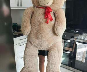gift, surprise, and teddy bear image