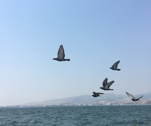 birds, peace, and blue image