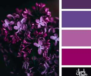 colors, purple, and liliac image