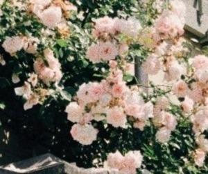 header, random headers, and flower header image