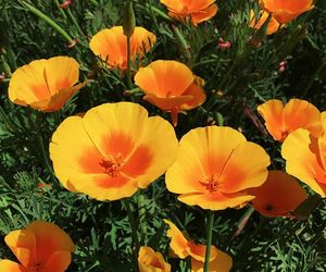 colours, flowers, and orange image