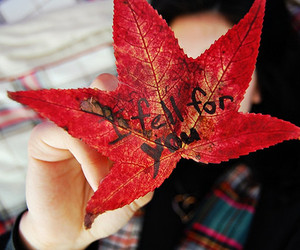 leaf and cute image