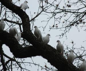 alternative, animals, and birds image