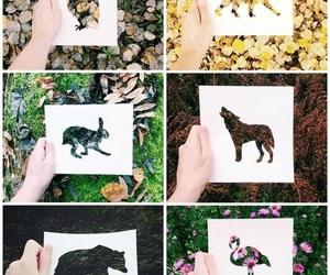 amazing, animals, and colourful image