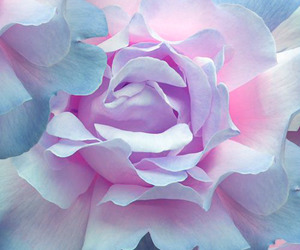 flower, pastel, and pastel color image