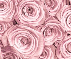 pink flowers and pink wallpaper image