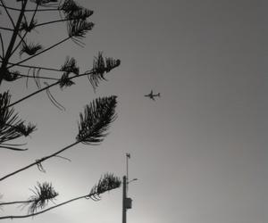 arbol, lima, and black&white image