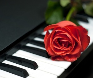 music, rose, and piano image