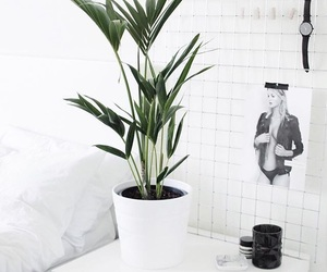 white, plants, and style image